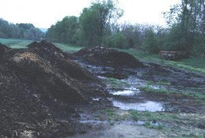 2 puddles by compost pile
