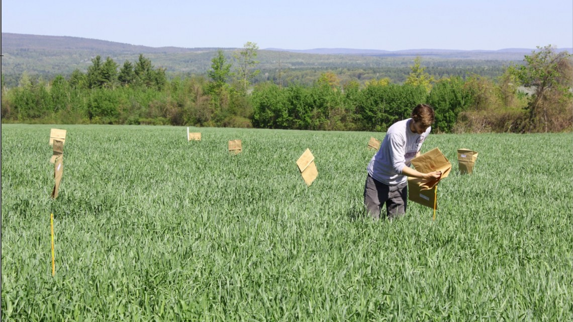 man-checking-crops-in-a-field