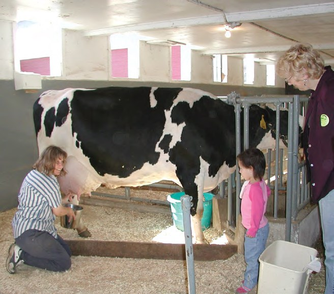cow-milking-demonstration