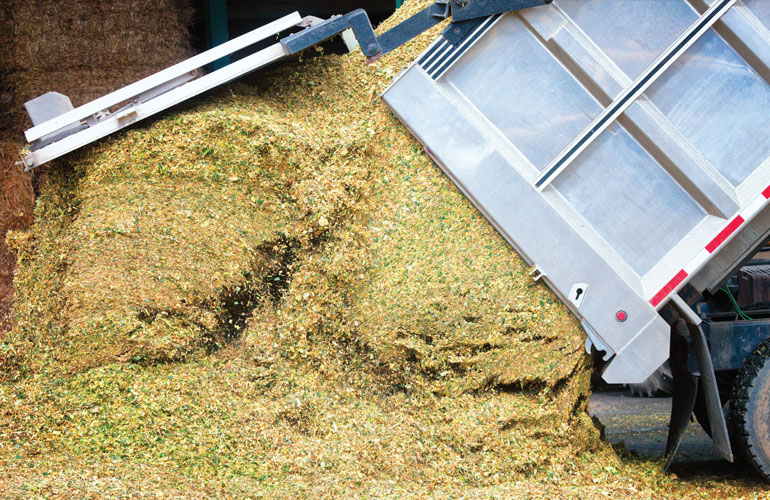 dairy-farmer-image-of-forage