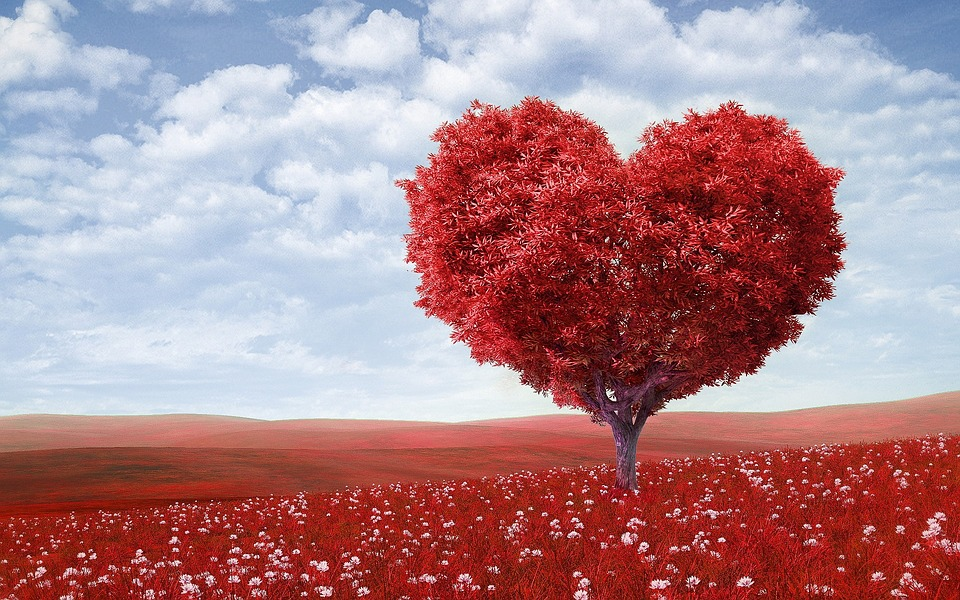 heart shaped red tree