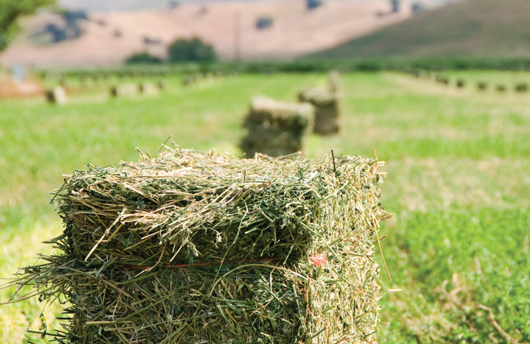 image-of-high-quality-hay