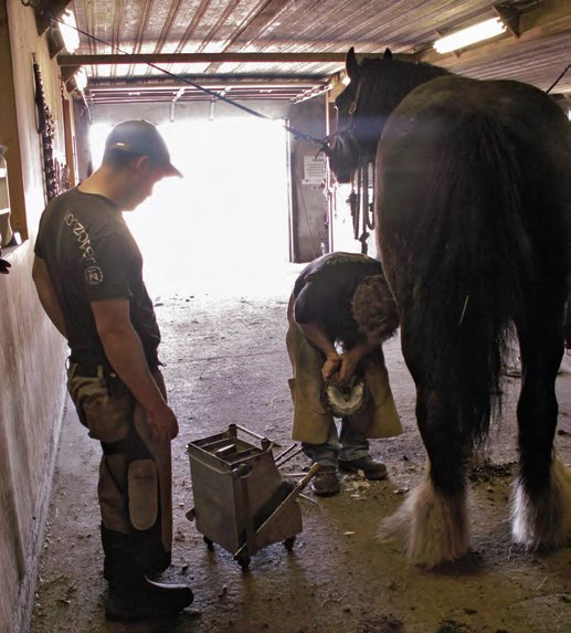 horse-with-farrier