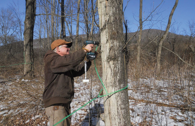dale-miller-drilling-a-hole-into-maple-tree