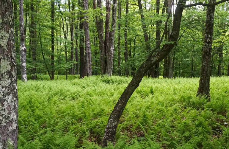 beautiful-looking-woodlot-green-with-trees