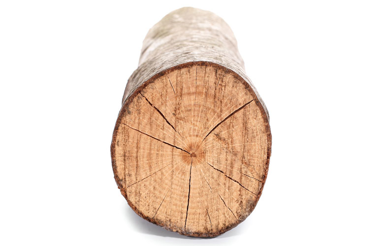 image-of-a-log