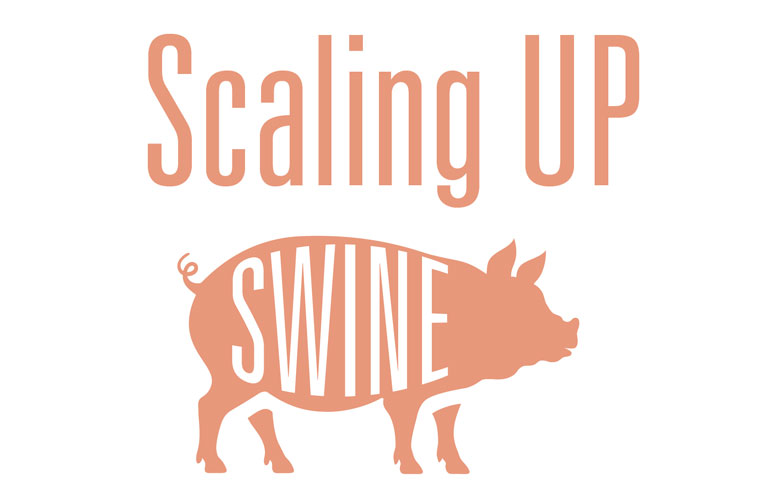 image-of-a-swine-illustration