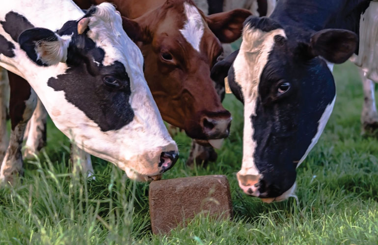 different-types-of-cattle