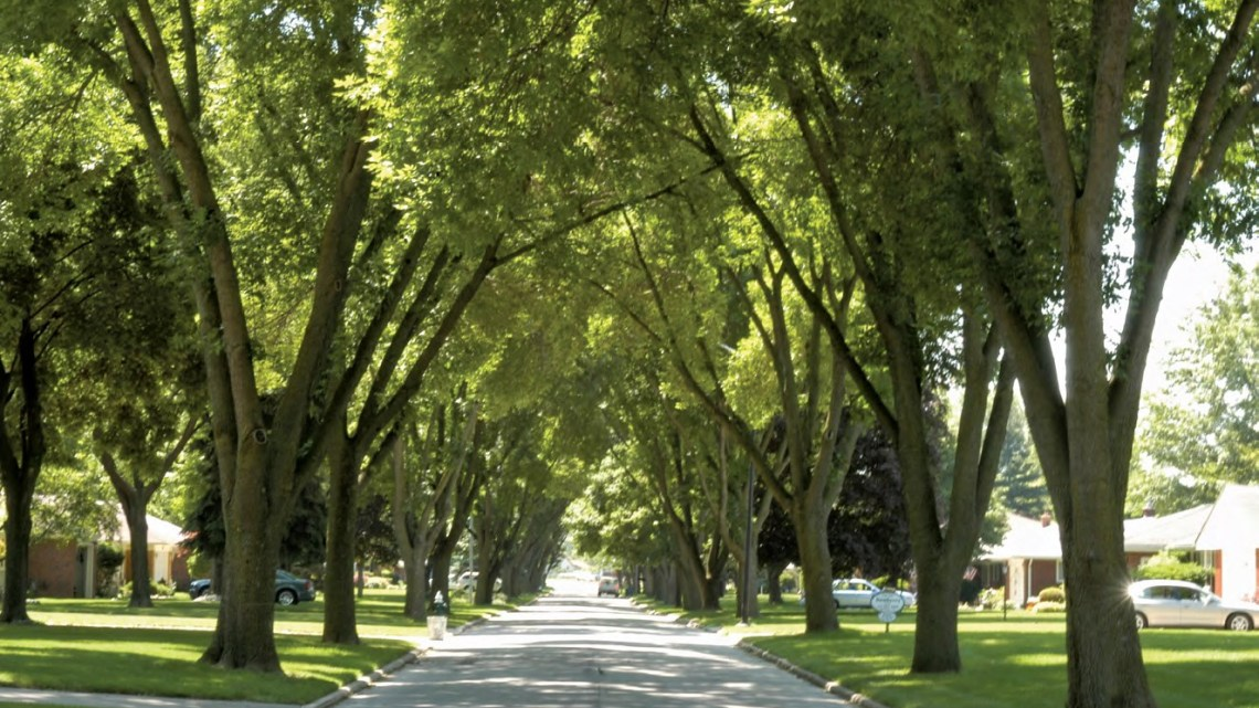 street-with-trees-on-the-side