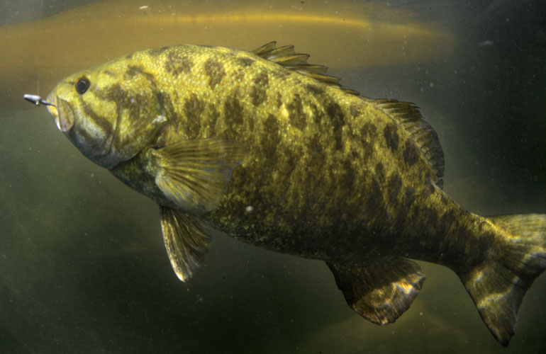 image of a bay fish
