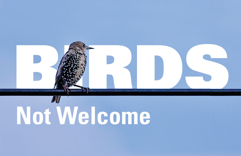 birds not welcome image