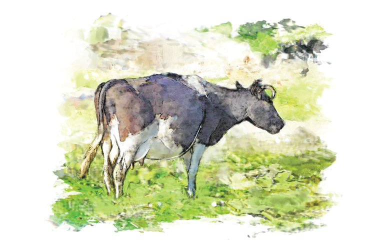 painting of a dairy cow